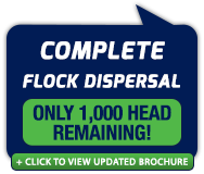 flock-dispersal.png